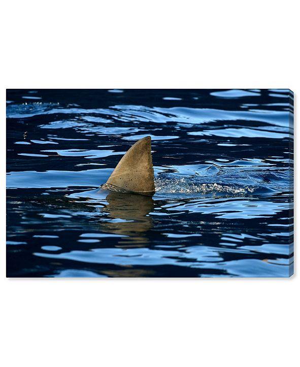 "Oliver Gal Great Whiteshark Fin, Shark Fin, Oceanshark Fin by David Fleetham Canvas Art, 36"" x 24"""
