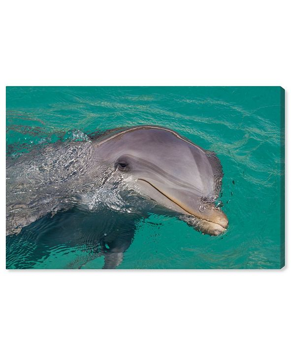 "Oliver Gal Atlantic Bottlenose Dolphin by David Fleetham Canvas Art, 15"" x 10"""