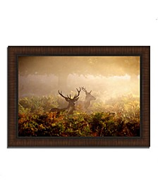 """Two Stags at Dawn Framed Photograph Print, 36"""" x 26"""""""