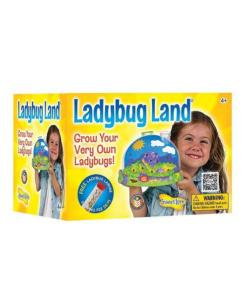 Insect Lore STEM Educational Ladybug Life Cycle Growing Kit