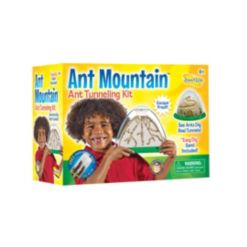 Insect Lore Observe Live Ants Work Together, Problem Solve, And Forage For Food