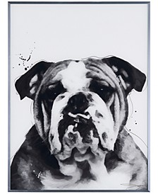 "Bulldog Pet Paintings on Reverse Printed Glass Encased with a Gunmetal Anodized Frame Wall Art, 24"" x 18"" x 1"""