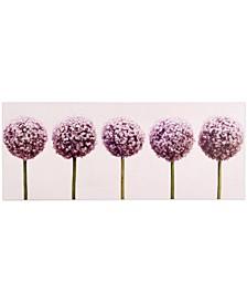 Row of Alliums Wall Art