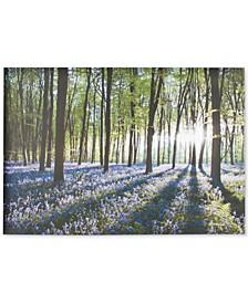Bluebell Landscape Canvas Print