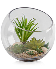 Home Essentials Terrarium Kit