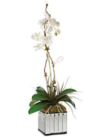 Kaleama Orchids Artwork
