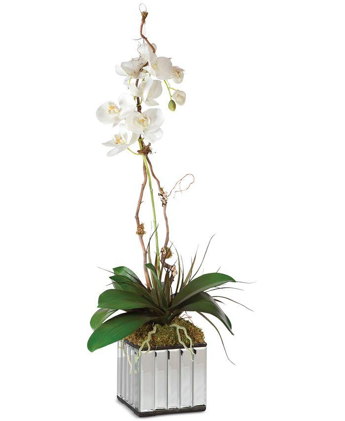 Uttermost - Kaleama Orchids