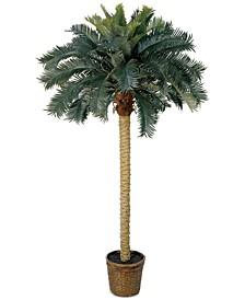 6' Sago Palm Tree