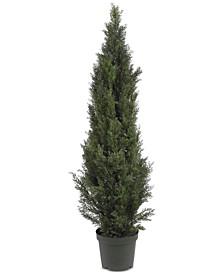 5' Mini Cedar Pine Indoor/Outdoor Tree