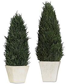 Cypress Cone Topiaries Set of 2