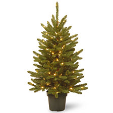 National Tree Company 4' Kensington in Green Growers Pot with 100 Clear Lights