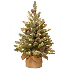 2' Snowy Concolor Fir Small Tree in Burlap with Snowy Cones & 50 Warm White Battery Operated LEDs with Timer