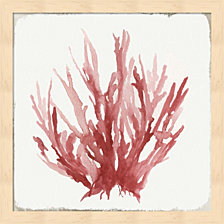 Red Coral I By Aimee Wilson Framed Art