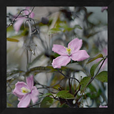 Springtime II by Sarah Gardner Framed Art