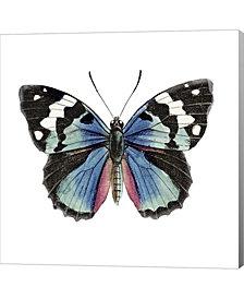 Butterfly Botanica2 By Tre Sorelle Studios Canvas Art