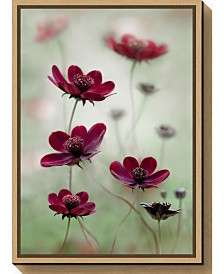 Amanti Art Cosmos sway by Mandy Disher Canvas Framed Art