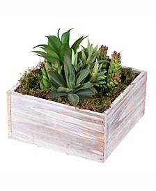 7 inch Succulent Arrangement In A Square White Woodland Planter