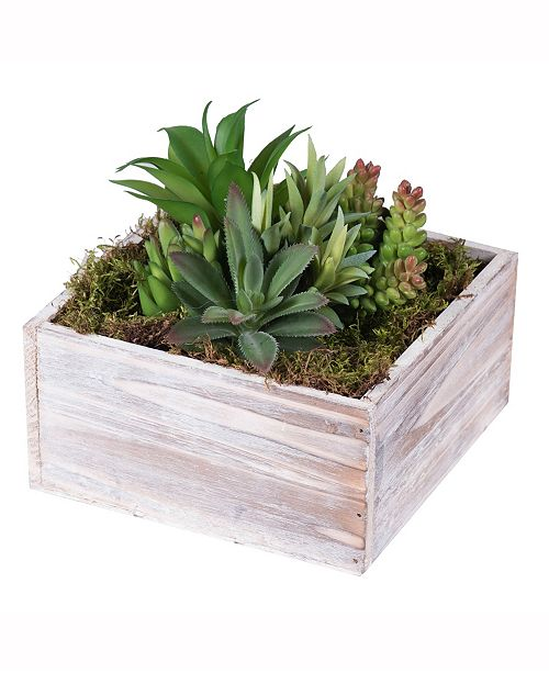 Vickerman 7 inch Succulent Arrangement In A Square White Woodland Planter