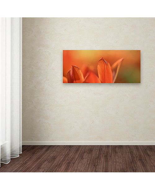 "Trademark Global Cora Niele 'Duc van Tol Orange Tulip' Canvas Art, 14"" x 32"""