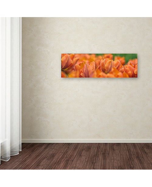 "Trademark Global Cora Niele 'Orange Tulip Scape' Canvas Art, 10"" x 32"""