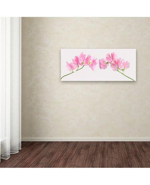 "Trademark Global Cora Niele 'Two Sweet Peas' Canvas Art, 14"" x 32"""