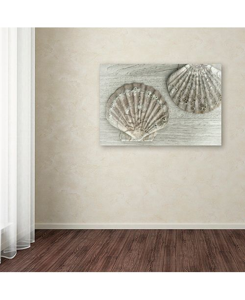 "Trademark Global Cora Niele 'Two King Scallop Shells' Canvas Art, 16"" x 24"""