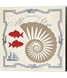 Pacific Nautilus by Studio Mousseau Canvas Art