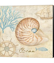 Nautical Shells III by Cynthia Coulter Canvas Art