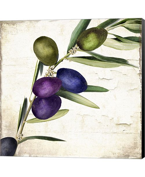 Metaverse Olive Branch III by Color Bakery Canvas Art