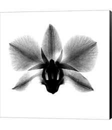 Orchid, Phalenop. X-Ray by Bert Myers Canvas Art