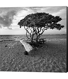 Hawaiian Tree by Rob Cherry Canvas Art