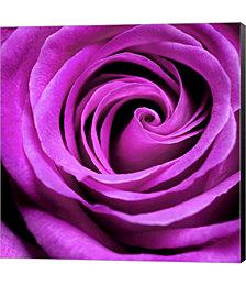 Purple Rose by PhotoINC Studio Canvas Art
