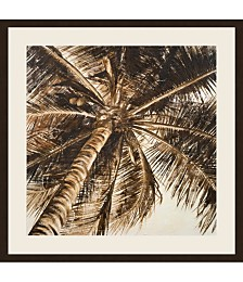 Coconut Palm II by Patricia Pinto Framed Art