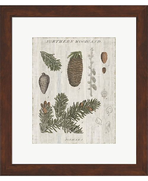 Metaverse Woodland Chart IV by Sue Schlabach Framed Art