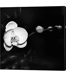 Warm White Orchid BandW by Harold Silverman Canvas Art