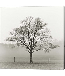 Winter Tree, Cades Cove by Nicholas Bell Photography Canvas Art