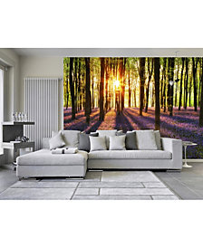 Woodland At Dawn Wall Mural
