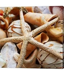 Gold Starfish I by Susan Bryant