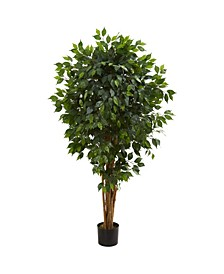 5.5' Ficus Artificial Tree