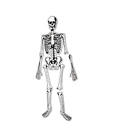 Learning Resources Skeleton Floor Puzzle 15 Pieces