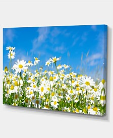 "Designart White Daisies Under Bright Blue Sky Floral Canvas Art Print - 32"" X 16"""