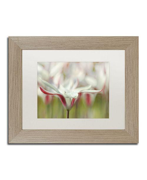 "Trademark Global Cora Niele 'Tulipa Clusiana Cashmeriana' Matted Framed Art - 14"" x 11"" x 0.5"""
