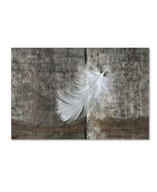 "Trademark Global Cora Niele 'White Feather on Rough Wood' Canvas Art - 32"" x 22"" x 2"""