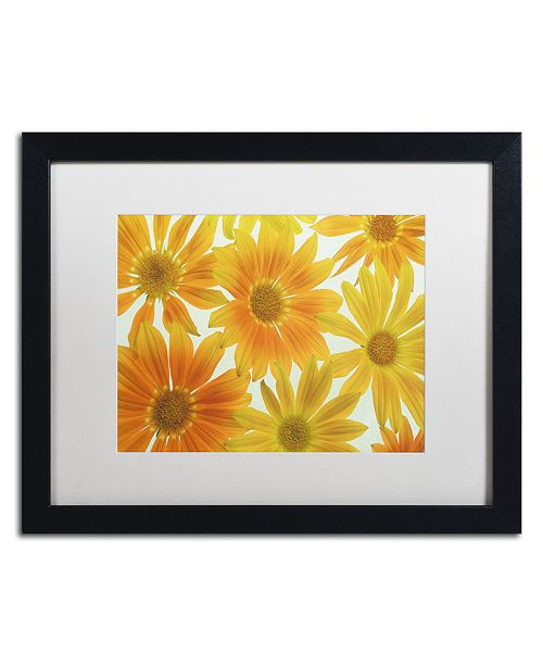 "Trademark Global Cora Niele 'Orange Daisies' Matted Framed Art - 16"" x 20"" x 0.5"""