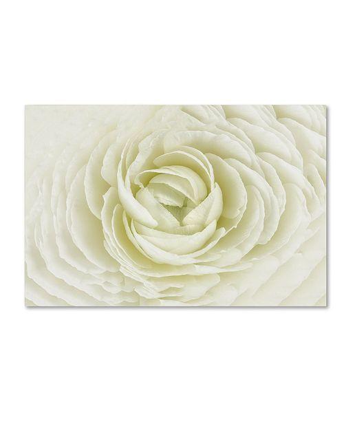"Trademark Global Cora Niele 'White Persian Buttercup' Canvas Art - 47"" x 30"" x 2"""