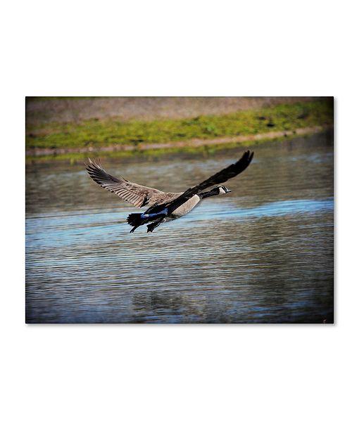 "Trademark Global Jai Johnson 'Canadian Goose In Flight 2' Canvas Art - 24"" x 18"" x 2"""