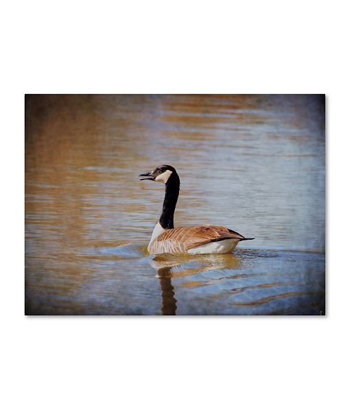 """Trademark Global Jai Johnson 'Canadian Goose In The Water' Canvas Art - 47"""" x 35"""" x 2"""""""