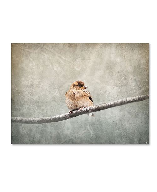 "Trademark Global Jai Johnson 'Sparrow Braving The Cold' Canvas Art - 47"" x 35"" x 2"""