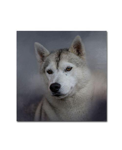 "Trademark Global Jai Johnson 'Siberian Husky' Canvas Art - 35"" x 35"" x 2"""