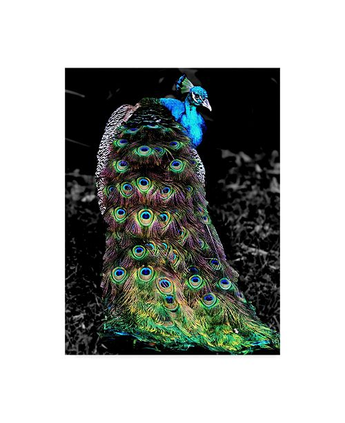 "Trademark Global Dana Brett Munach 'Peacock at Night' Canvas Art - 47"" x 35"" x 2"""